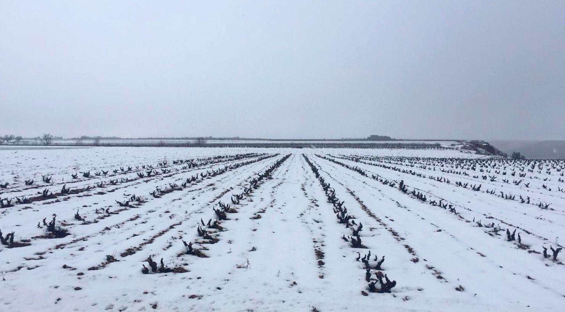 Bodegas Tierras De Murillo | Viñedo | Invierno