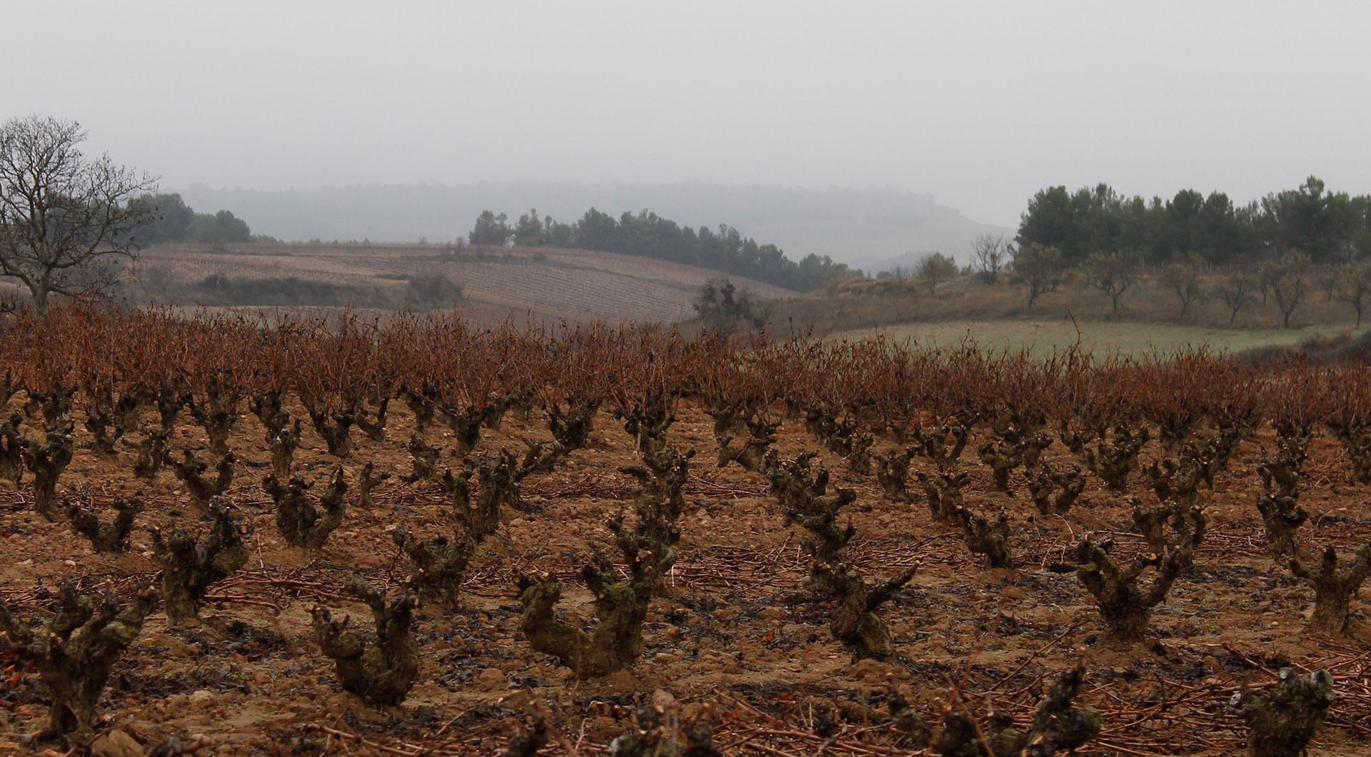 Bodegas Tierras De Murillo | Viñedo | Otoño